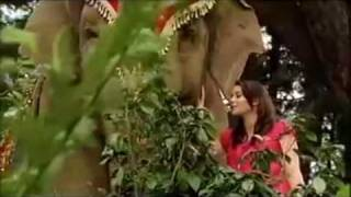The Elephant Princess Theme-Emily Robins And Maddy tyers-Two Worlds Forever HD YouTube Videos