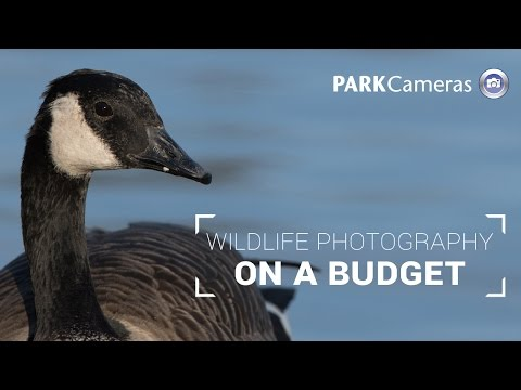 On A Budget: Wildlife Photography Buying Guide