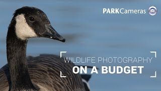 on a budget wildlife photography buying guide