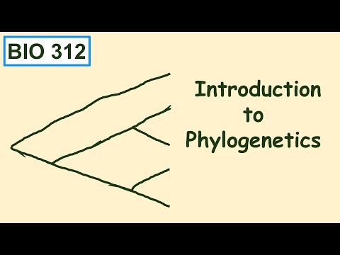 Bio 312 video 13: Phylogenetics 1, introduction