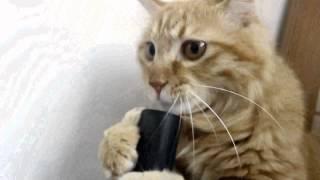Funny Cat- Смешная кошка играет с пылесоса 2015