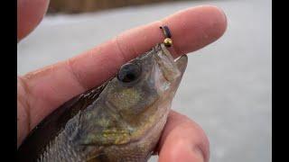 Окунь на безмотылку Рыбалка на жерлицы Разведка водоемов