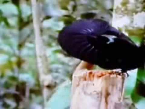 Tập tính sinh sản một số loài chim