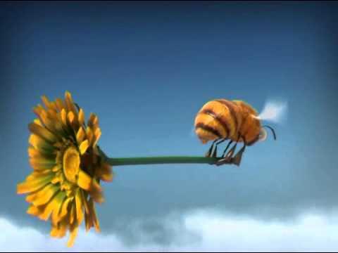 Youtube filmek - Csodabogarak - Darazsak (1.évad 4.rész)