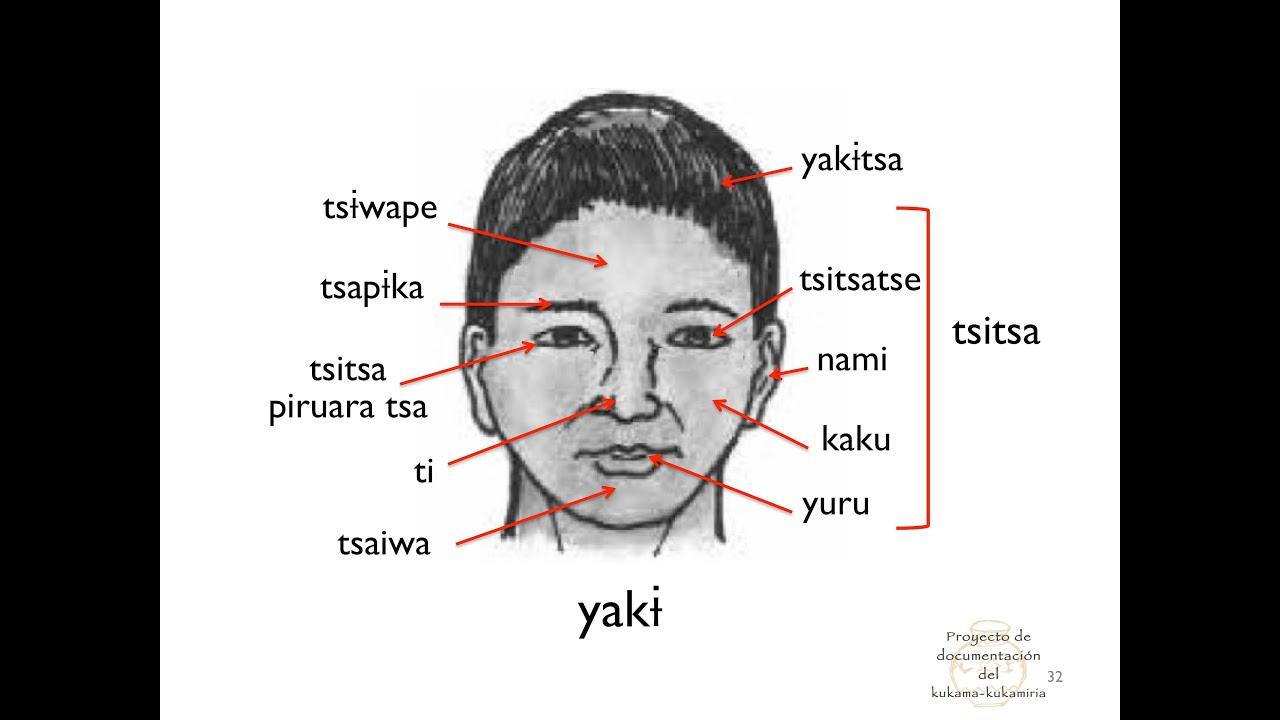 Dibujos De Aplicacio De Partes De La Cara: Aprendiendo Kukama: Partes De La Cabeza