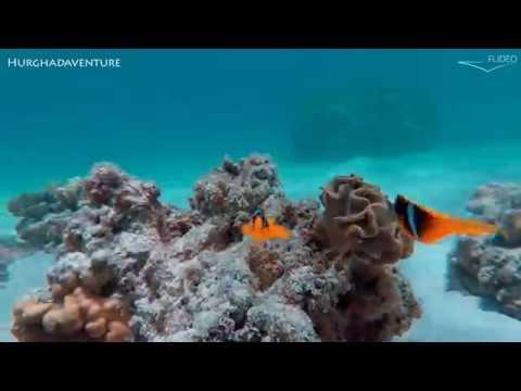 An Amazing Trip to Egypt - Red Sea - Hurghada to Shalateen
