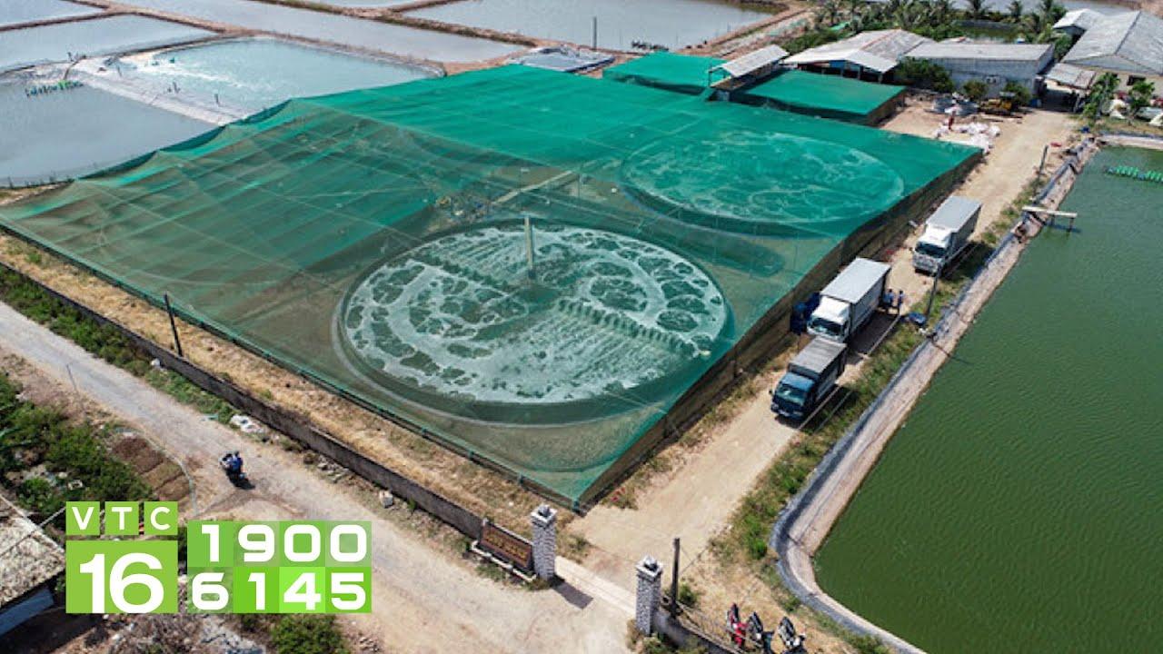 Thu 23 tỷ đồng nhờ 1ha nuôi tôm công nghệ cao | VTC16