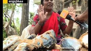 Popular Videos - Neyyattinkara