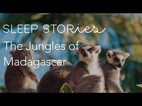 Calm Sleep Stories | The Jungles Of Madagascar | Trailer