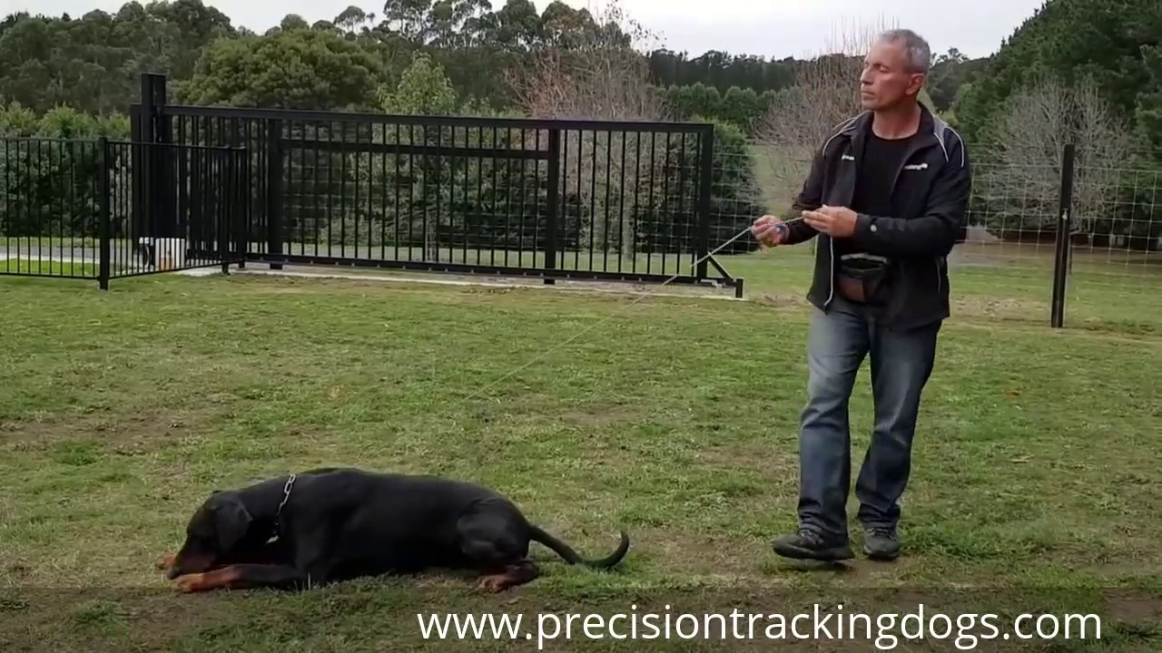 Going to Ground - The Methodology of Police Dog Training
