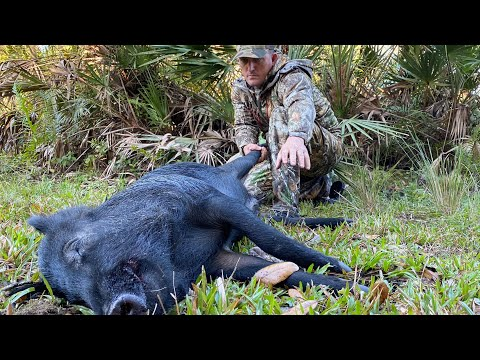 Wild Boar Hunting With 6.5 Creedmoor {Catch Clean Cook} Slow Roasted Organic Pork Ham