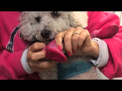 RC Pets Pawks Dog Boots Product Review | Keep Doggie Safe