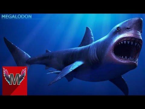 4 Penampakan Hiu Megalodon Yang Terekam Kamera