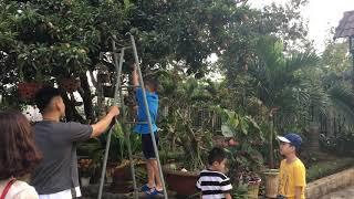 Tết 2019 hái trái cây nhà ông Bảy