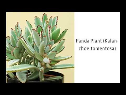 Top 10 Outstanding Succulent Plants For The Home Fine