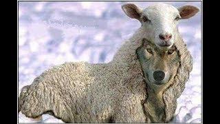 Lupi în mijlocul oilor - Paul Bucur