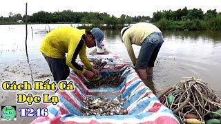 Không ngờ Cách Bắt Cá Kỳ Lạ này lại Dính Quá Nhiều Cá | Fishing | NGÃ NĂM TV T246