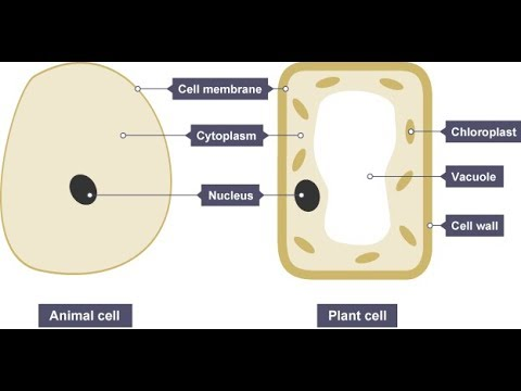 Biology Cell Part 2 (Cell Theory) Class 8 VIII/VII