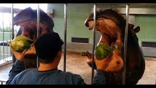 Hippo Training