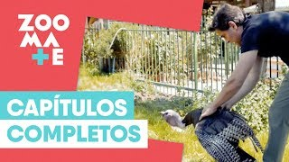 ZOOmate - Rescate animal | Capítulo 19