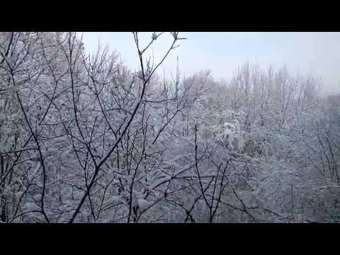 Гостиницы Москвы. Гостиница Узкое. Вид из окна на зимний лес