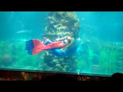 Mermaid Show Mp3