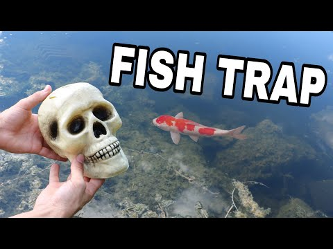 SKULL FISH TRAP CATCHES RARE COLORFUL FISH