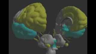The Electro Interstitial Scan: Tired brain with high blood pressure and stress