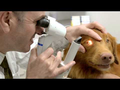 Pint the Dog Takes a Tour of the UC Davis Veterinary Hospital