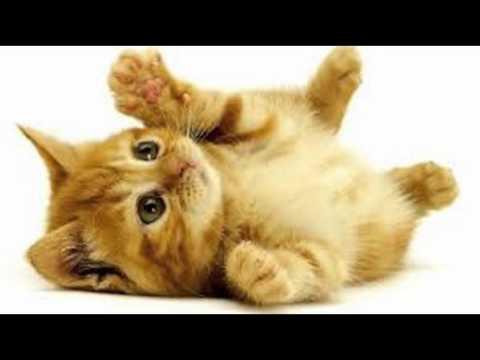 Super cute cats. - YouTube