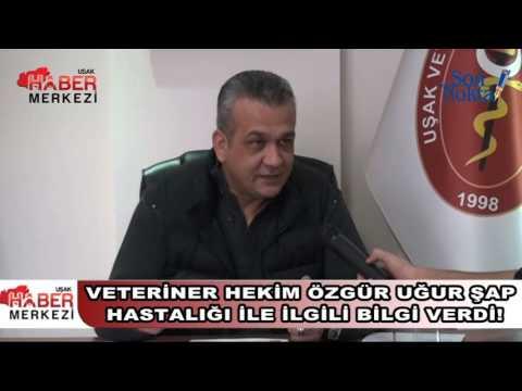 Veteriner Hekim Ozgur Ugur Sap Hastaligi Ile Ilgili Bilgi Verdi