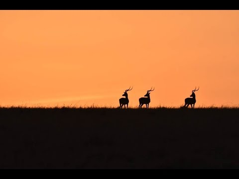 Maasai Mara Safari | Day 2 (WARNING)