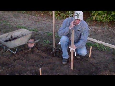 Создай сад. Как правильно посадить плодовый саженец.