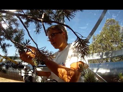 Tree Mortality Research at Los Alamos National Laboratory