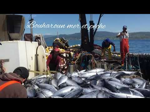 BOUHAROUN MER&PÊCHE - YouTube