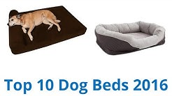 10 Best Dog Beds 2016