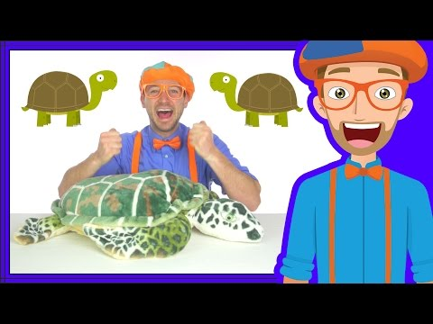 Thumbnail: Animal Songs for Children | The Tortoise Song by Blippi