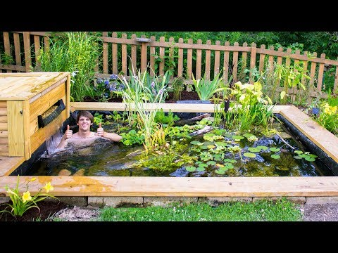 Adding Fish To The DIY Pond