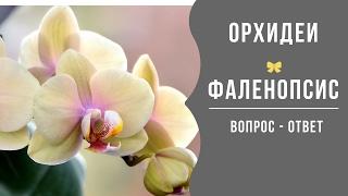 Орхидеи. Вопрос - Ответ.(В этом видео я отвечу Вам на вопросы, о том как узнать, когда пора поливать орхидею, а так же мое видение,..., 2015-06-15T05:31:33.000Z)