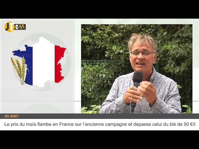 Le prix du maïs flambe en France sur l'ancienne campagne