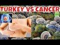 TURKEY TAIL FUNGUS Turkey Tail Mushrooms Help Immune System Fight Cancer