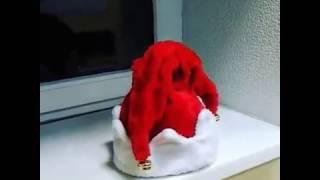 видео купить шапку оптом