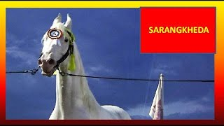सर्वश्रेष्ठ नुकरा सफेद घोडा  Best Nukra Stallion Horse In Sarangkheda Horse Fair