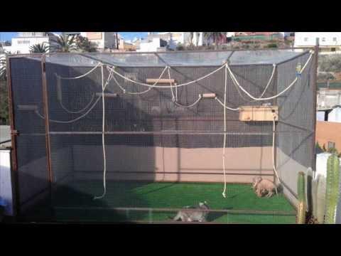 diy sugar gliders cage brico jaula de petauros del azcar