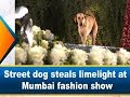 Street dog steals limelight at Mumbai fashion show