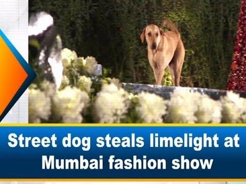 DJ Sama - Street Dog Steals Limelight At Mumbai Fashion Show