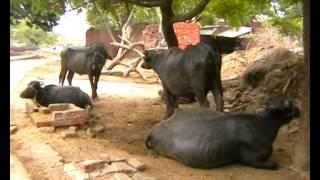 Jury meeting for Milk selling in Mainpuri Uttar Pradesh