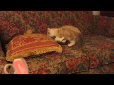 RagaMuffin Cat World 8944
