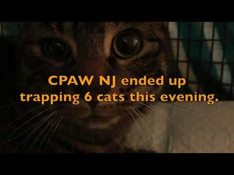 TNVR with CPAW NJ