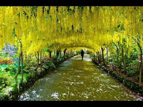 Los 17 t neles de rboles m s hermosos del mundo hd youtube - Arboles bonitos para jardin ...